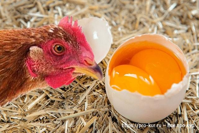Яйцо с двумя желтками это нормально у кур молодок и старух.