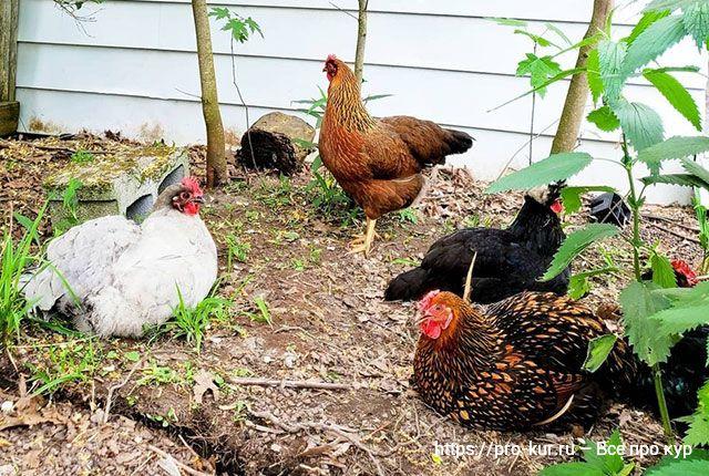 Что влияет на качество скорлупы яиц.
