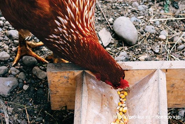 Витаминные корма для кур несушек в домашних условиях.