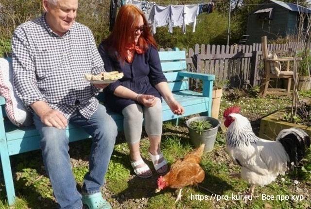 О пользе куриных прогулок и всеядности кур несушек.