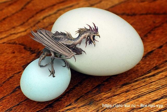 Петушиное яйцо и какой зверь вылупится: Василиск или Кокатрис?
