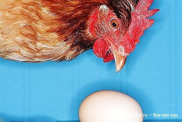 Премиксы в питании кур яичных, мясояичных пород и бройлеров.