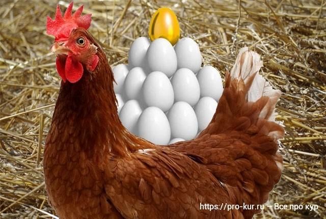 Яйценоскость у кур и как ее повысить в домашних условиях.