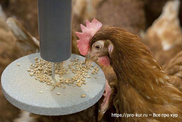 Инновации птицеводства и последние достижения отрасли.