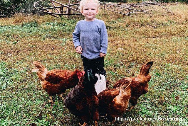Курица хромает на одну лапу – причины и что делать, как лечить.