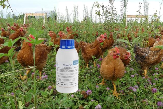 Пробиотик Муцинол для здоровья и продуктивности домашней птицы.