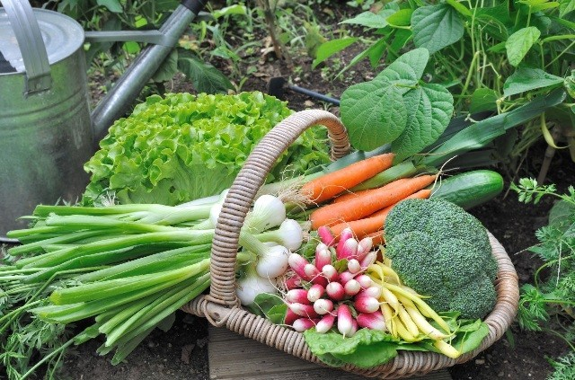 Удобрения и био препараты для сада, огорода и комнатных растений.