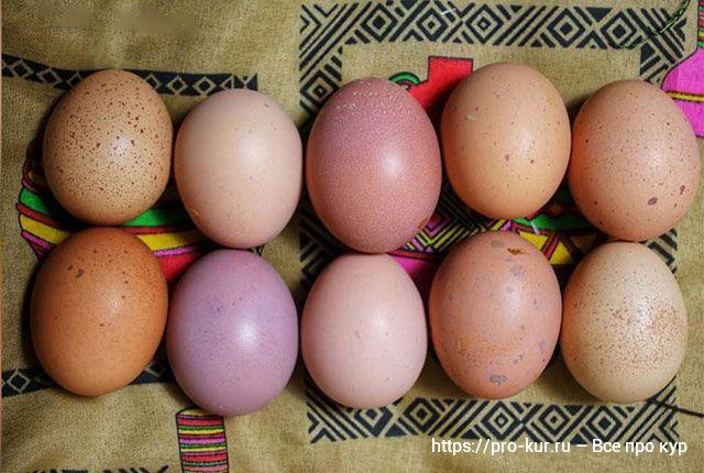 Мыть куриные яйца или не мыть перед хранением?