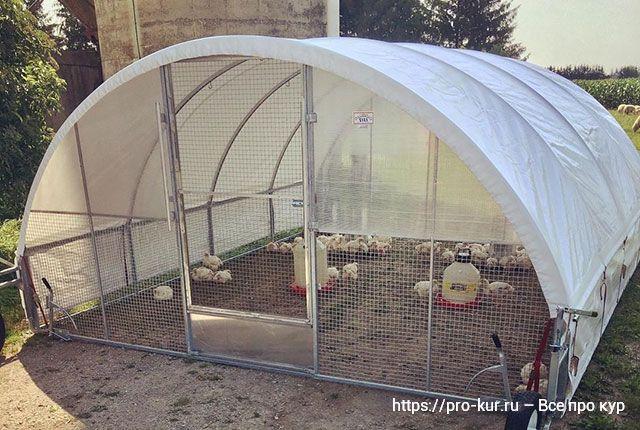Интенсивное выращивание цыплят-бройлеров в домашних условиях.
