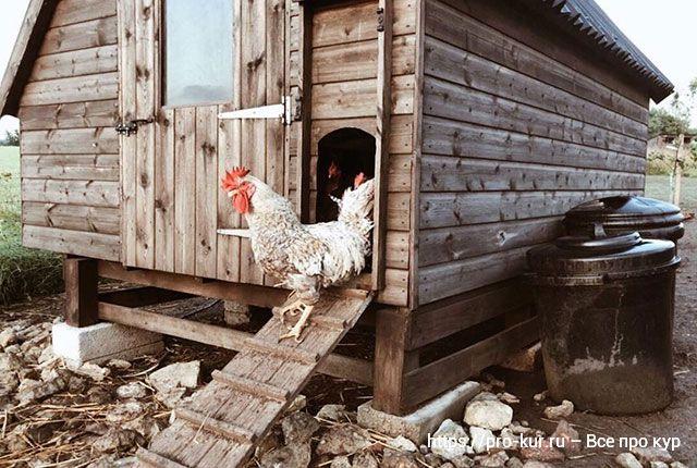 Важные моменты при строительстве сарая для кур.