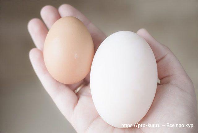 Яйца домашних уток и что говорят диетологи о видах яиц.