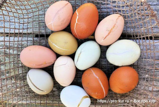 Треснутое яйцо можно есть или лучше выбросить?