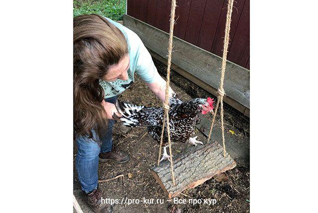Как сделать куриные качели быстро и просто от скуки у несушек зимой.