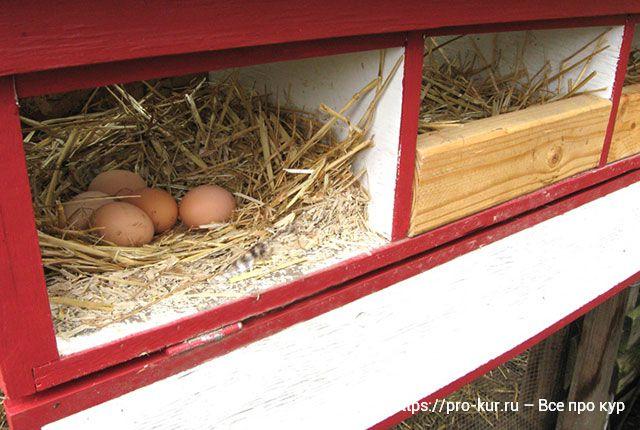 Выносные внешние гнезда как сделать своими руками на стену курятника.